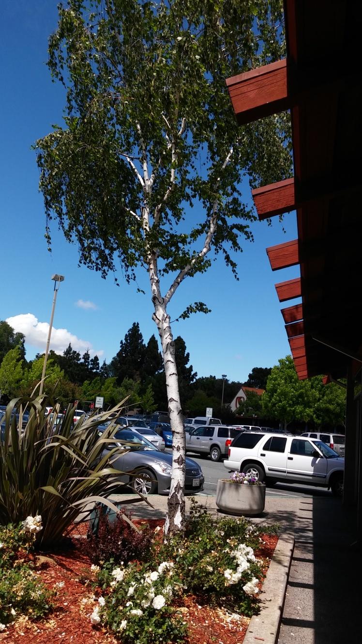 Plsnt Hills, CA.jpg