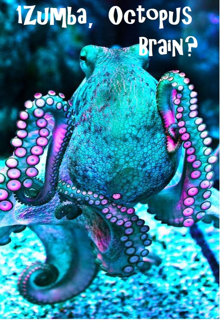 1Z-octopus Brain