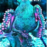 1Zumba,  Octopus  9  Brains?