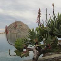 Cactus  Bay!