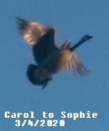 Carol2Sophie