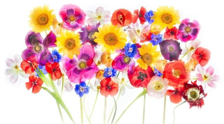 FlowersArt