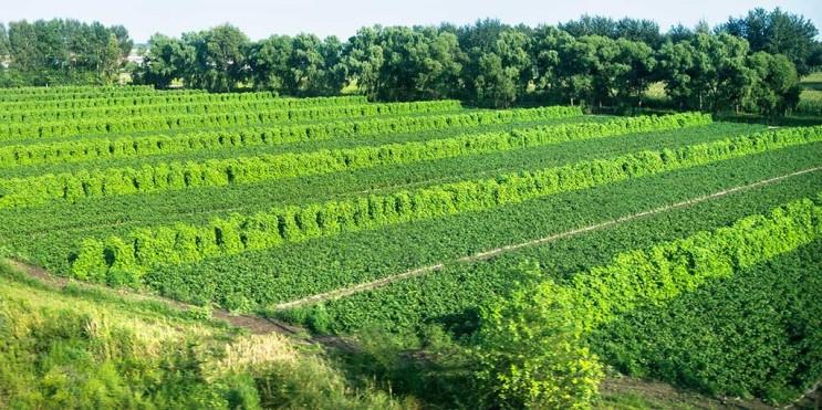 agroforestry-farm-1024x512-1